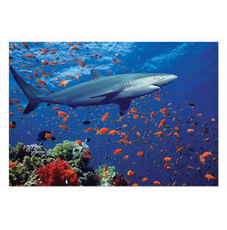 Shark Jigsaw Puzzle - 100 Pieces